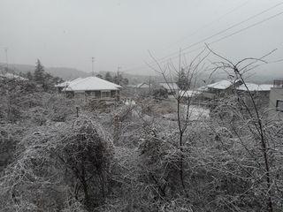 初積雪(屋外).jpg