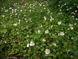 庭の花 アマドコロ他 009 (800x600).jpg