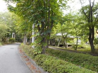 朝の散歩道.JPG