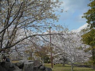 藤原山公園 花見 005.JPG
