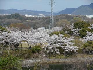 藤原山公園 花見 028.JPG