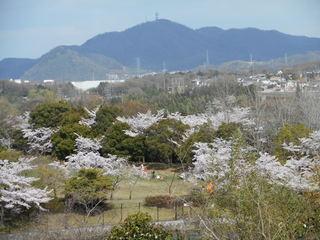 藤原山公園 花見 029.JPG