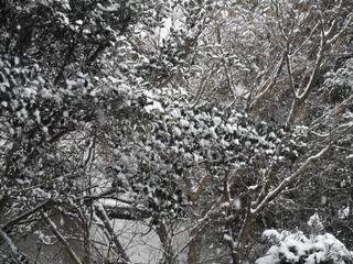 降り続く雪.JPG