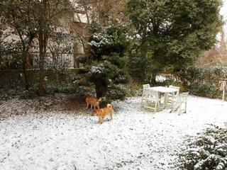 3月の雪 001 (800x600).jpg